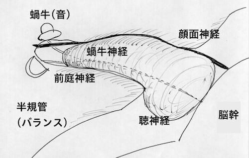 ガンマナイフ治療 聴神経腫瘍における解剖
